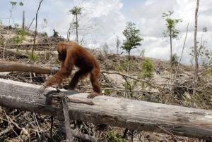 Un de nos citoyens d'honneur dans une zone de déforestation