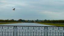 Hampton Court Palace, Richmond upon Thames | 51°24' N, 0°20' W | MMVII, septembre © HRH Grand Duchess Julianna of Ruritania